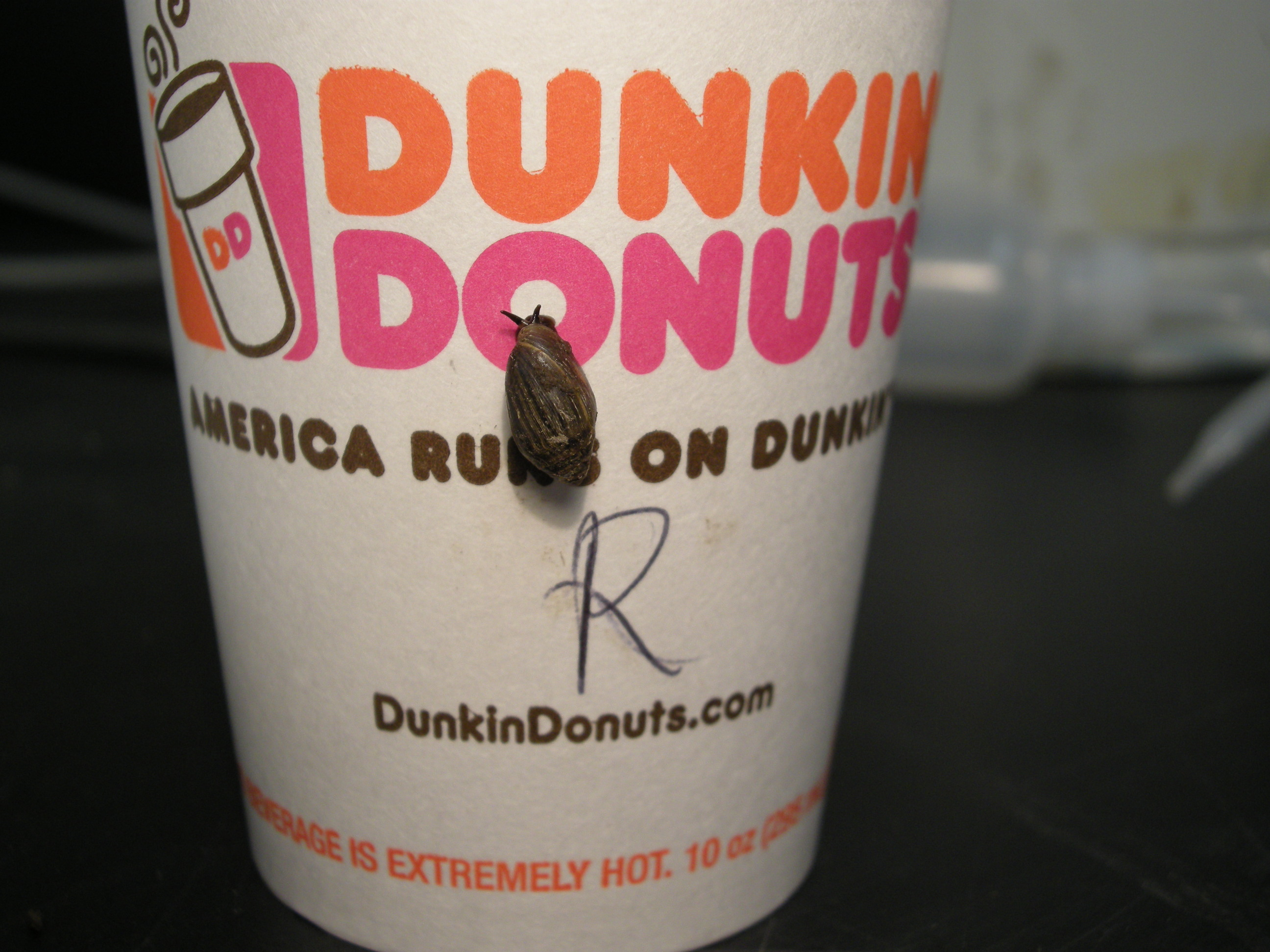 Dunkin Donuts Ice Cream Cake Wadsworth