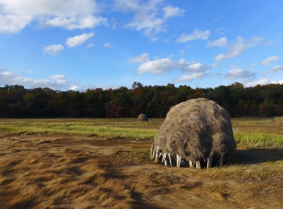 Hay stacks in fall, Newbury, Massachusetts