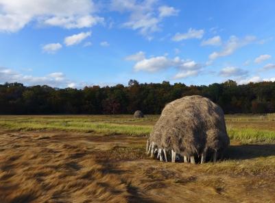 Hay stacks in fall, Newbury, Massachusetts