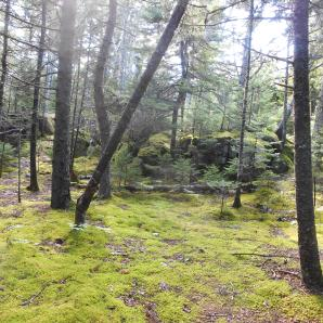 Moss covered ground in Acadia, Maine
