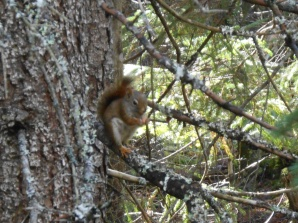 Red squirrel. I like his little orange socks.