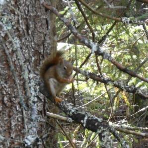 Red squirrel. I like his little orange socks.