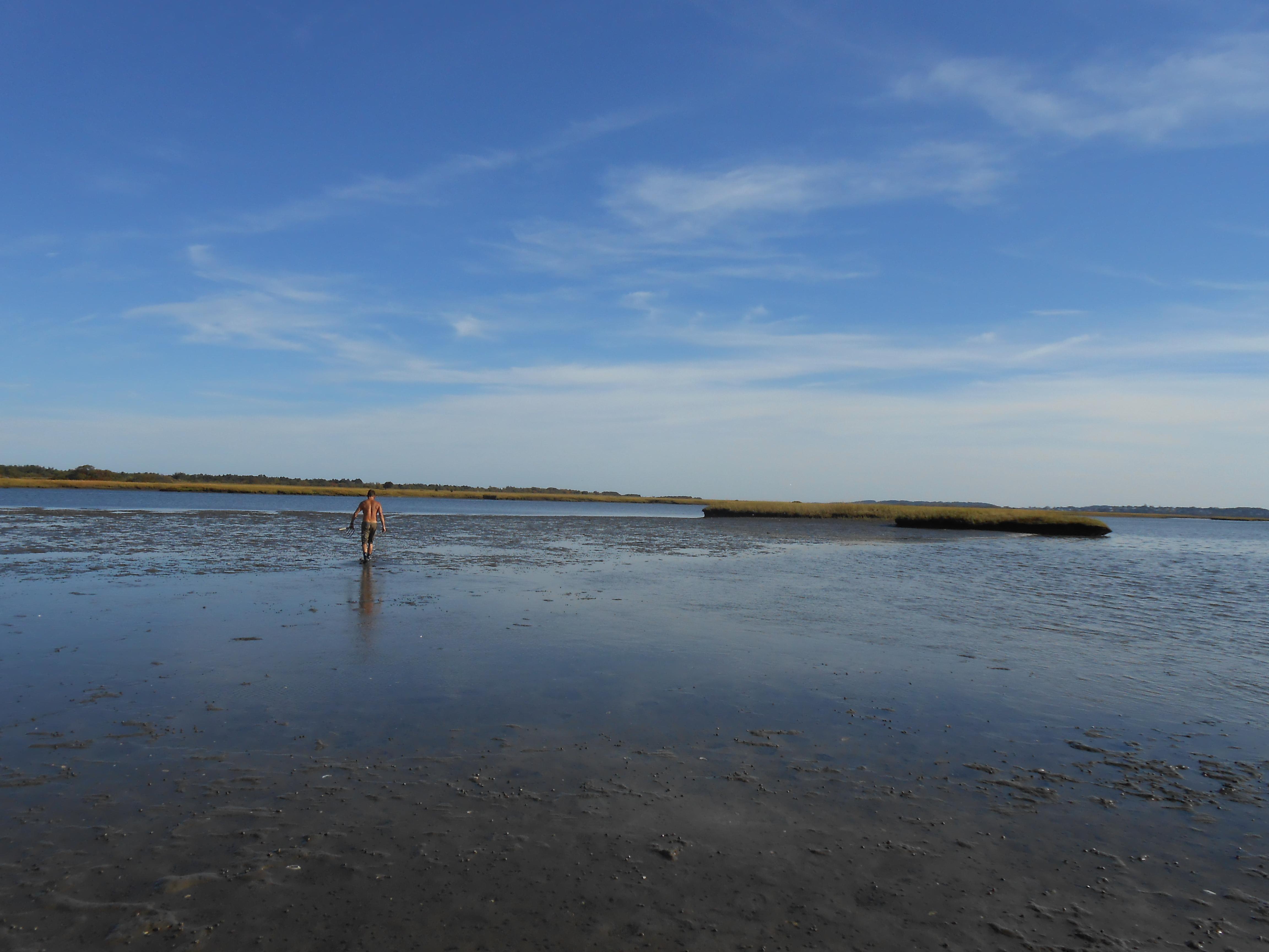 Intertidal Clam Beds Long Island Ny