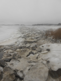 Frozen marsh - Parker River, Newbury, Massachusetts (3)