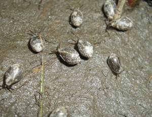 Summertime snails in Rowley, Massachusetts