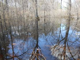 Vernal pool, Newbury, Massachusetts (2)