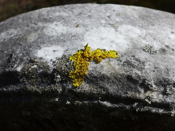 Even the lichens like to show their colors
