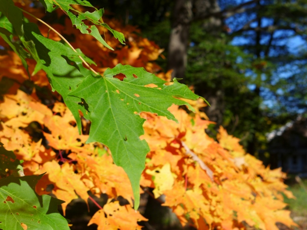 Fall colors, Rowley, Massachusetts, Oct 2014 (2)