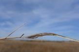 Stretch spider, Tetragnathid spider, Goodwin Island, VA (7)