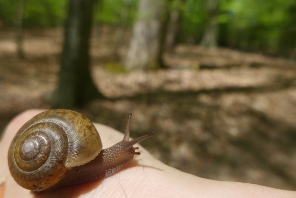 A snail and I take a walk in the woods.