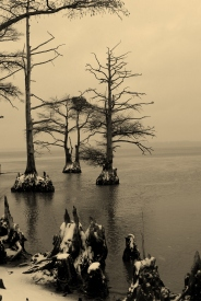 James River Snow, Cypress trees (1)
