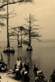 James River Snow, Cypress trees (1)