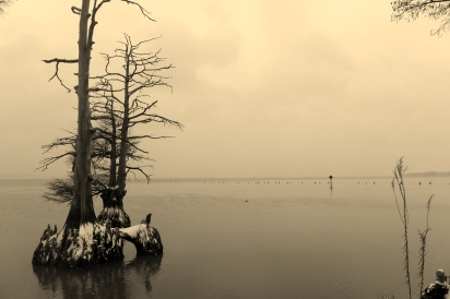 James River Snow, Cypress trees (2)