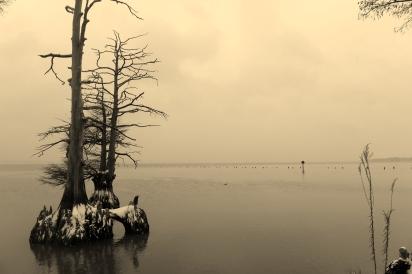James River Snow, Cypress trees (2)