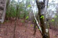 Jamestown, VA, woods (5)