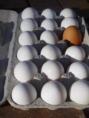 Yard eggs (2)