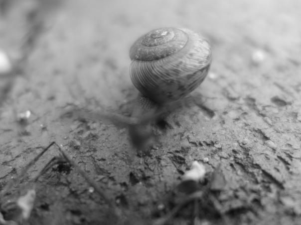 Backyard snail (2)